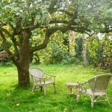 cropped-photo-tree-and-chairs-1.jpg